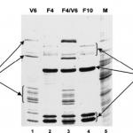 Decorative Image of Gel Electrophoresis
