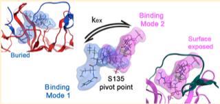 Binding modes