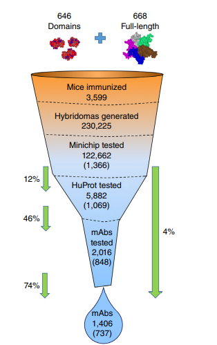 The attrition funnel through which immunogens entering the PCRP pipeline ultimately generate high-quality mAbs.