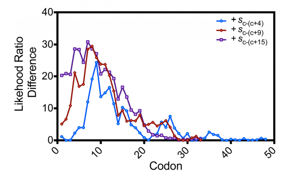 Variation in codon influence as a function of position in the coding sequence