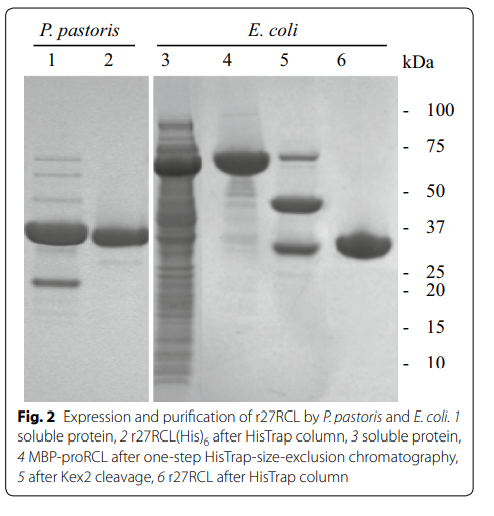 2 Expression and purification of r27RCL by P. pastoris and E. coli. 1 soluble protein, 2 r27RCL(His)6 after HisTrap column, 3 soluble protein, 4 MBP-proRCL after one-step HisTrap-size-exclusion chromatography, 5 after Kex2 cleavage, 6 r27RCL after HisTrap column