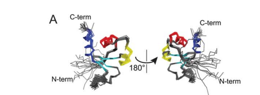 Superposition of the backbone of 18 the lowest energy structures as determined from NMR constraints. The a1, a2, and a3 helices of the aromatic claw are colored red, yellow, and blue, respectively, while the pseudo-sheet is cyan.