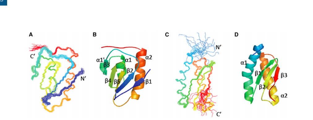 (A–D) Superimposed conformers representing the solution structures of the (A) N-terminal domain (NTD) and (C) C-terminal domain (CTD). Ribbon diagrams representing the (B) NTD and (D) CTD. The residues in each domain are colored from blue at the N terminus to red at the C terminus.