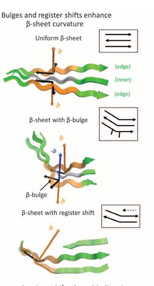 Bulges and register shifts enhance beta-sheet curvature