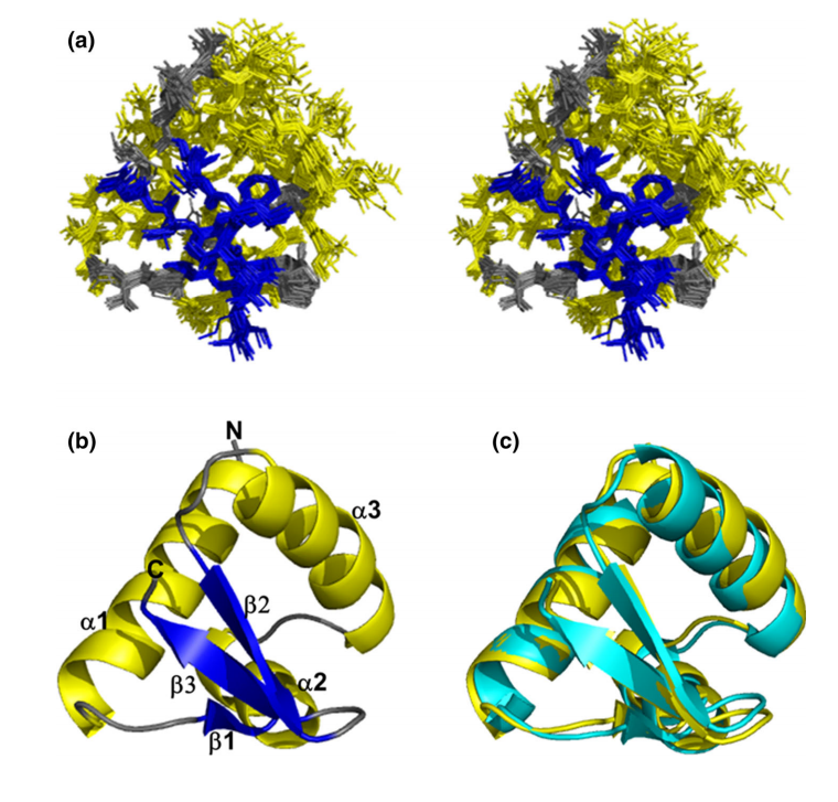 Stereoview of the superimpositions of the 20 lowest energy structures of human ZaDLM-1
