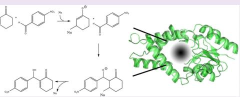 Morita−Baylis−Hillman reaction