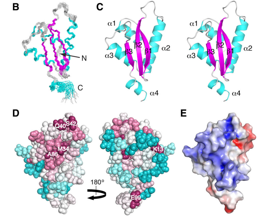 Solution NMR structure of RP-L35Ae from Pyrococcus furiosus.