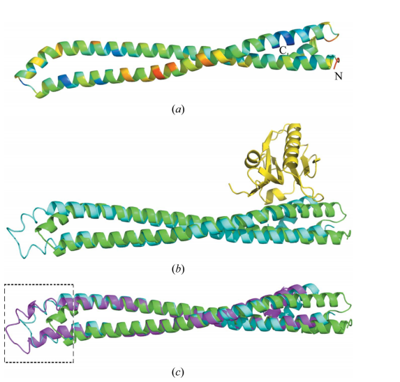 Overall structure of p85 iSH2 domain and comparison with other iSH2 domain structures