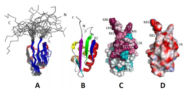 Superposition of the final ensemble of 20 conformers from the solution NMR structure of Asl3597 (PDB ID, 2KRX).