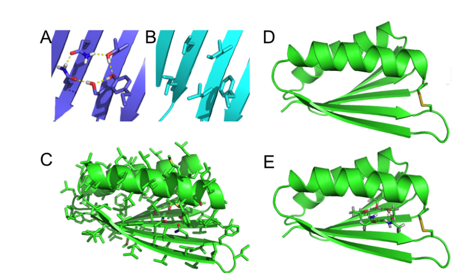 """Top7_PC and Top7 models. Close up view comparing the core region of Top7 before (B) and after (A) hydrogenbond network incorporation. (C) Hydrogen-bond network in the context of the whole structure of one of the initial """"inverted"""" Top7 models. (D) Model of the disulfide-bonded variant of Top7. (E) Model of disulfide-bonded Top7 with core hydrogen-bond network."""