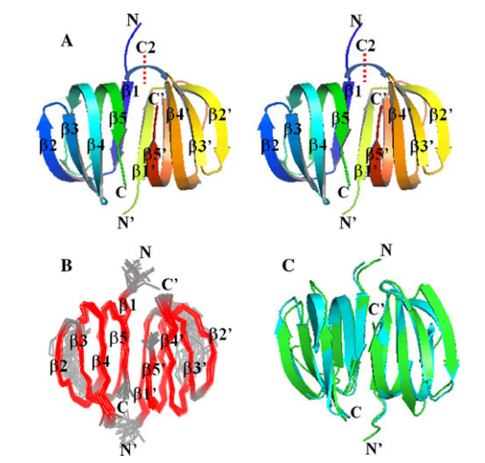 Stereoview of the lowest energy conformer of the final NMR ensemble of the Dsy0195 homodimer (PDB ID: 2KYI). The C2 symmetry axis of Dsy0195 homodimer is indicated by as red dashed line and labeled C2.
