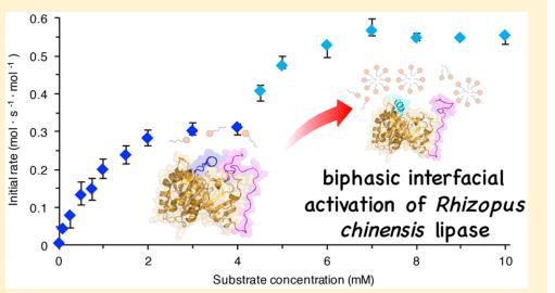 Biphasic interfacial activation of Rhizopus chinensis lipase