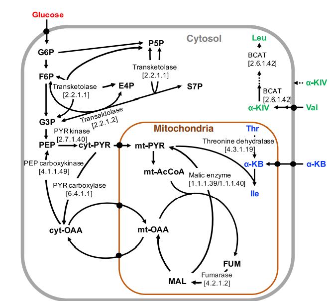 Biochemical reaction and metabolite transporter network of Pichia pastoris.