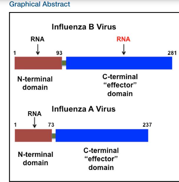 Influenza B virus