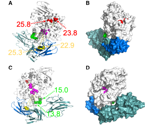 The spatial location in the homology model of BnPUL of the three residue pairs (K631/Q597, V328/I565, D541/D473) identified as mutational hotspots based on EC analysis resulting in mutant enzymes with improved catalytic activity.