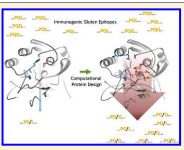 Immunogenic gluten epitopes