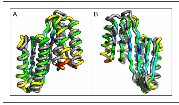 Comparison of the crystal structure of the ferredoxin-ferredoxin fusion to the design model.