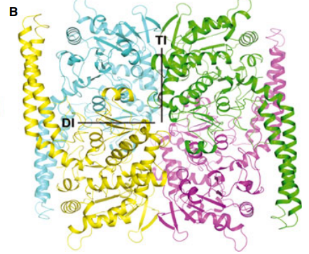 . PO4-complexed tetrameric LpcN-II structures
