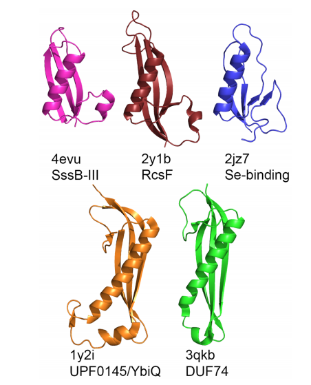 Proteins structurally similar to DUF1471 proteins