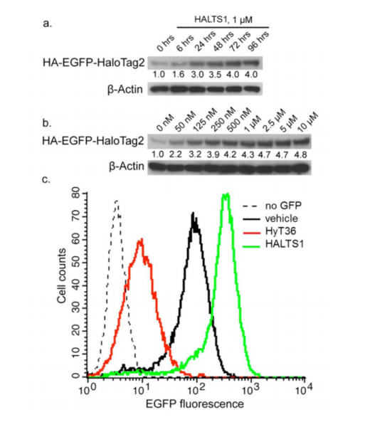 Characterization of HALTS1 activity in cells.