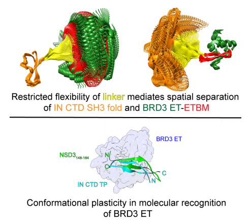 Conformational plasticity in molecular recognition of BRD3 ET