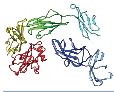 T0719: an example of the case where each domain is an evaluation unit. The colors indicate different domains. The N-terminus is in the dark blue domain, the C-terminus in the red domain