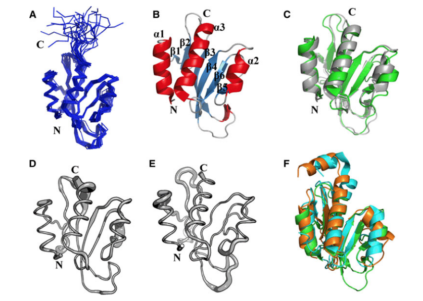 Three-dimensional structure of the Pspto_3016 protein from P. syringae (PDB IDs 2KFP and 3H9X). a