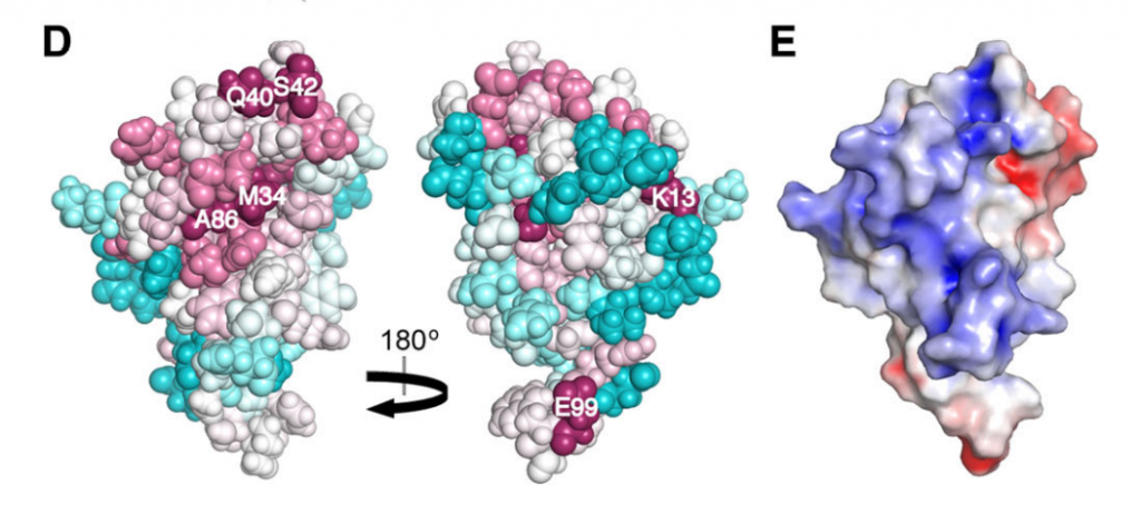 image showing the conserved residues in Alr2454 (residues 3–101). Residue coloring, reflecting the degree of residue conservation over the entire PF11267 protein domain family (Pfam 25.0 [1]; 80 sequences), ranges from magenta (highly conserved) to cyan (variable).