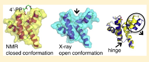 The solution nuclear magnetic resonance (NMR) structures and backbone 15N dynamics of the specialized acyl carrier protein (ACP), RpAcpXL, from Rhodopseudomonas palustris, in both the apo form and holo form modified by covalent attachment of 4′-phosphopantetheine at S37, are virtually identical, monomeric, and correspond to the closed conformation.