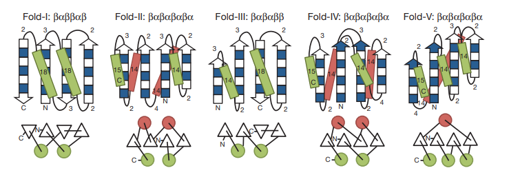 Derivation of secondary structure lengths from the rules for five protein topologies.