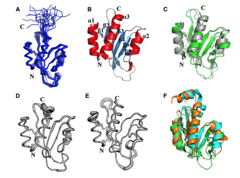 Three-dimensional structure of the Pspto_3016 protein from P. syringae (PDB IDs 2KFP and 3H9X).