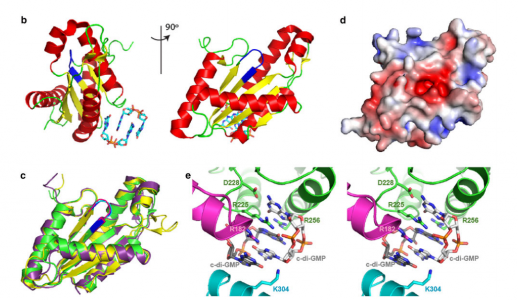 Crystal structure of the diguanylate cyclase (DGC) domain from M. aquaeolei protein A1U3W3. a Sequence alignment of the DGC domains of A1U3W3, PleD from C. crescentus, and WspR from P. aeruginosa by ClustalW