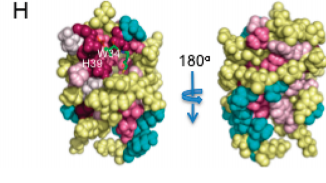 ) ConSurf (54) images, front view (same orientation as A) and back view. Magenta is highly conserved and cyan is variable. All structure figures in this paper were created with PyMol.