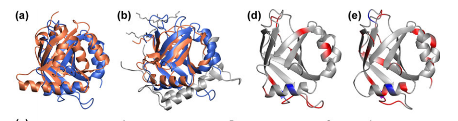 a Ribbon diagrams of MED25(391–543) in blue and the SPOC domain of SHARP (1OW1) in orange after superposition of Ca atoms identified by DALI.