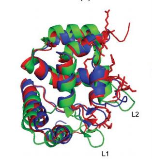 Comparison of the ARID domain of human ARID3A (red) with drosophila ''dead ringer'' Dri in the presence of dsDNA (blue, PDB code 1kqq) and in the absence of dsDNA (green, PDB code 1c20) after superposition of backbone N, Ca, and C' atoms of regular secondary structure elements for minimal RMSD.