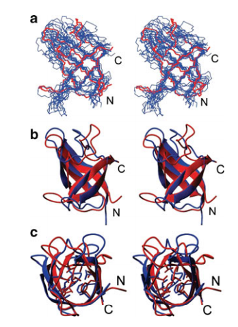 Stereoview of the superimposition of AutoStructure-CNS structure for [1H-13C]-I(d1)LV, 13C, 15N, 2 H-enriched CspA determined by conventional automated analysis methods (blue) with 1mjc (red).