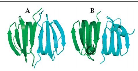 Ribbon drawings of (A) average structure of Dsy0195 determined by combined NMR, PRE, and DEER constraints and (B) crystal structure