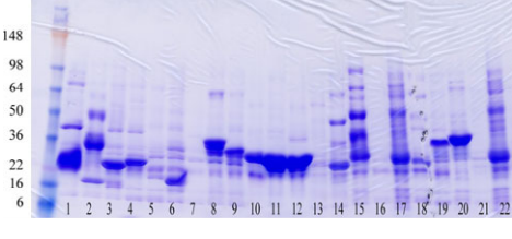 Coommassie blue stained SDS-PAGE showing expression and purification results of 22 different membrane proteins