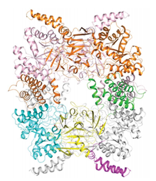 Protein domains