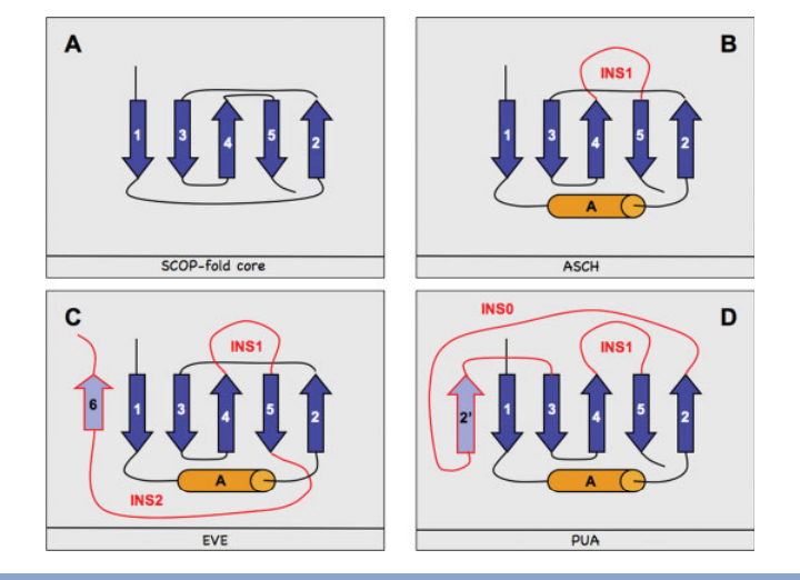 PUA-like domain topologies. In blue and orange, we denote strands and helices, respectively. Insertions (INS0, INS1, and INS2) characteristic of specific domains are marked in red and additional strands (i.e. strands within insertions, namely 6 and 20) in lavender.