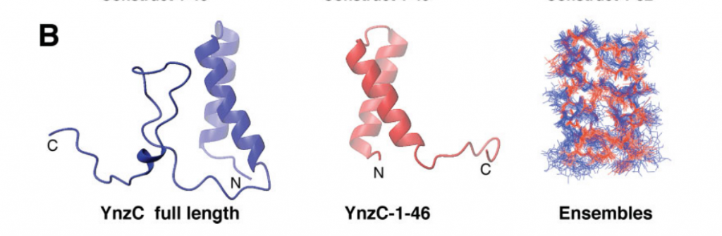 NMR solution structures of full length (blue; PDB ID, 2HEP) and truncated (red; PDB ID, 2JVD) protein YnzC from B. subtilis (NESG targets SR384 and SR384-1–46, respectively)