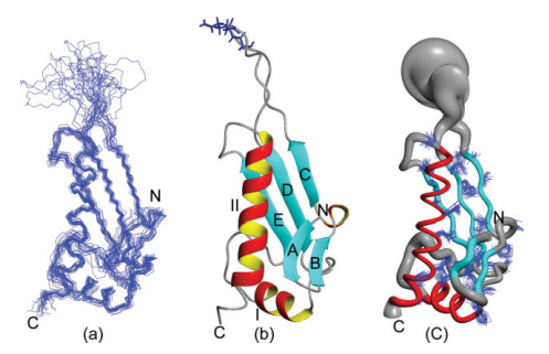 NMR structure of the P. syringae PTH domain.