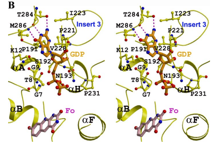 , schematic drawing of the interactions between GDP and CofD. C, overlay of the structure of the ternary complex with Fo and GDP (in purple) and that with Fo and Pi (in yellow). The Pi is located about 1 Å from the -phosphate of GDP, but there is a large difference in the conformation of the glycine-rich loop, indicated with the red star.