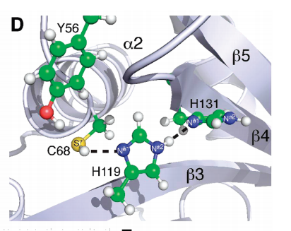 View into the active site of E. coli Spr[37-162] showing the conserved Cys-His-His catalytic triad and flanking tyrosine. Juxtaposed heavy atoms in the triad and secondary structural elements are labeled.