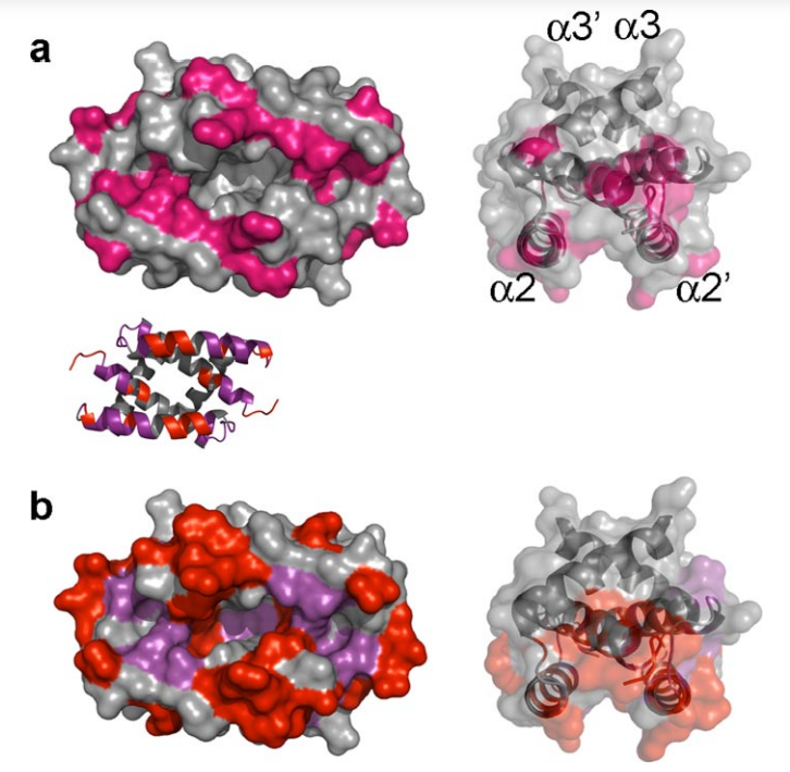 NMR chemical shift perturbation data for the NS1A-(1–73)dsRNA complex.