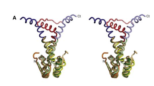 Homologous Phd/YefM/NE2111 Antitoxins Neutralize Toxins with Disparate Folds