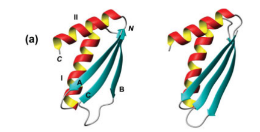 NMR structures of proteins VPA0419 (residues 13–82; on the left) and yiiS (residues 28–101; on the right).